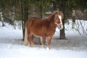 Пони - Тотошка