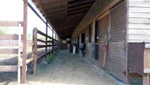 Постой лошадей